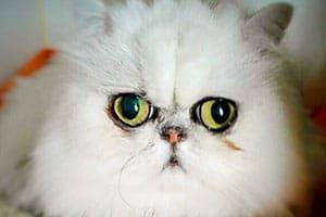 Cat Vet Podcast, Dr. Craig Smith, Tacoma Cat Hospital