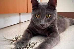 Medical and non-medical cat boarding tacoma